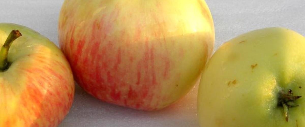 Овощи и фрукты, зреющие с 20 июля, обзор лучших оптовых рынков Крыма