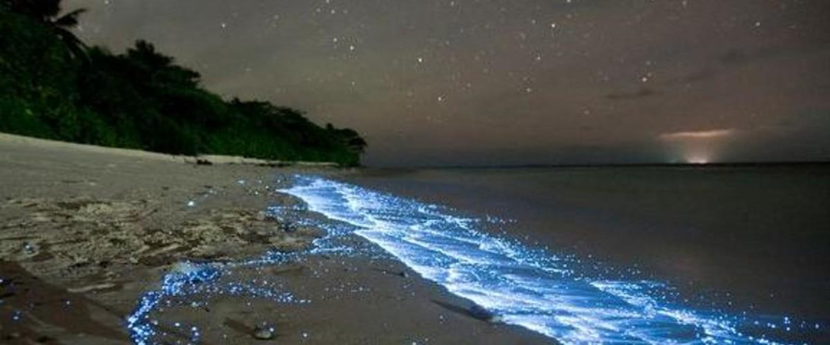 Как, когда и почему вода при ночных купаниях в Крыму светится?